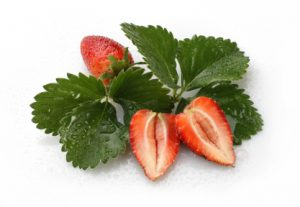 Strawberries between green leafs with water droplets